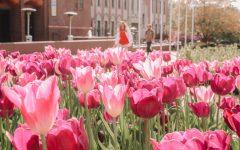Spring at SLU