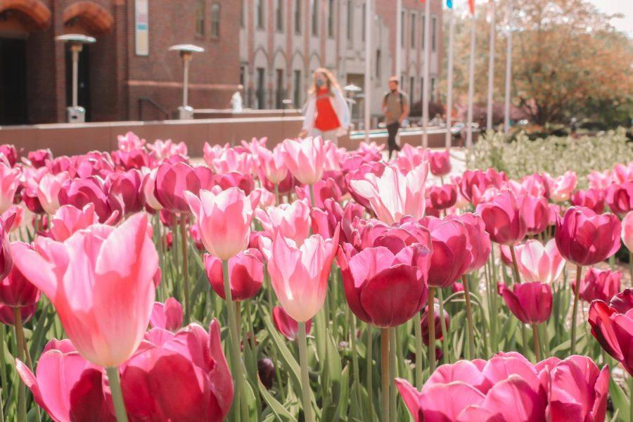 Spring+at+SLU